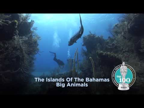 Bahamas holidays – Dive Dive and Dive