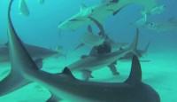 Bahamas water sports