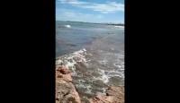 Ballenas Beach