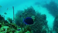 Underwater in the Seven Wonders of the World – Belize Barrier Reef